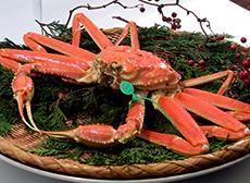 タグ付き茹で松葉蟹